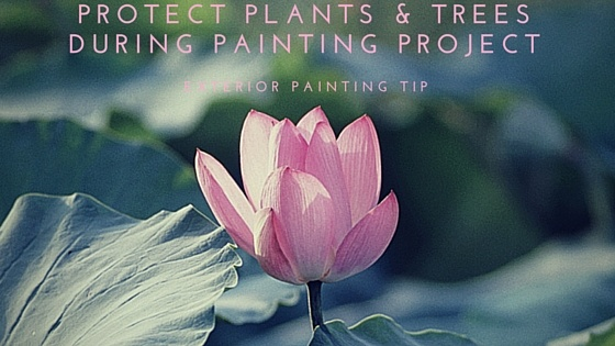 Protect_plants__Trees_During_Painting_project.jpg